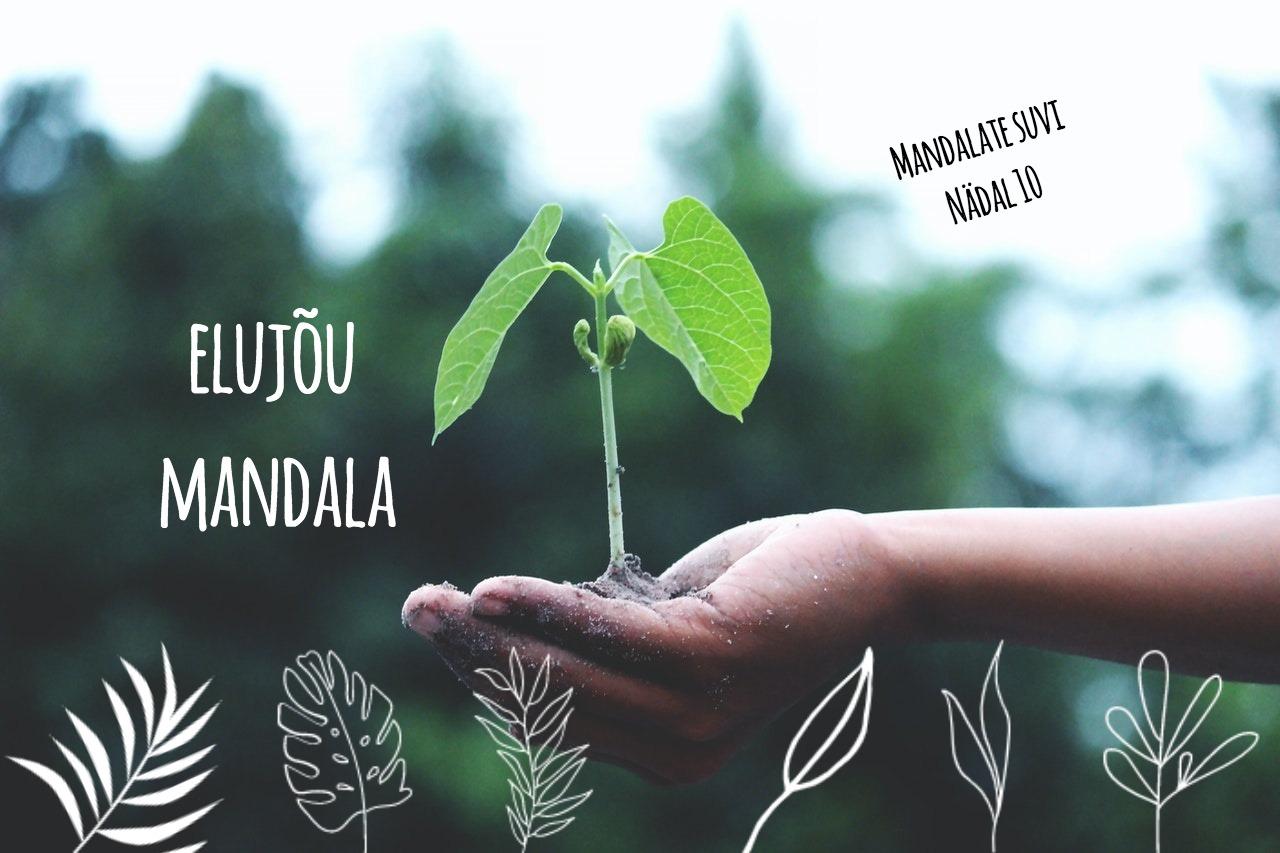 Mandalate suvi: Nädal 10